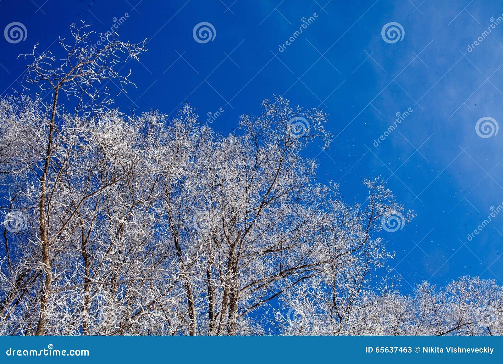 Jour d hiver givré