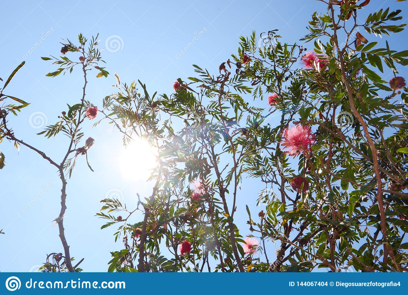 Jour ensoleillé avec un ciel bleu et un arbre