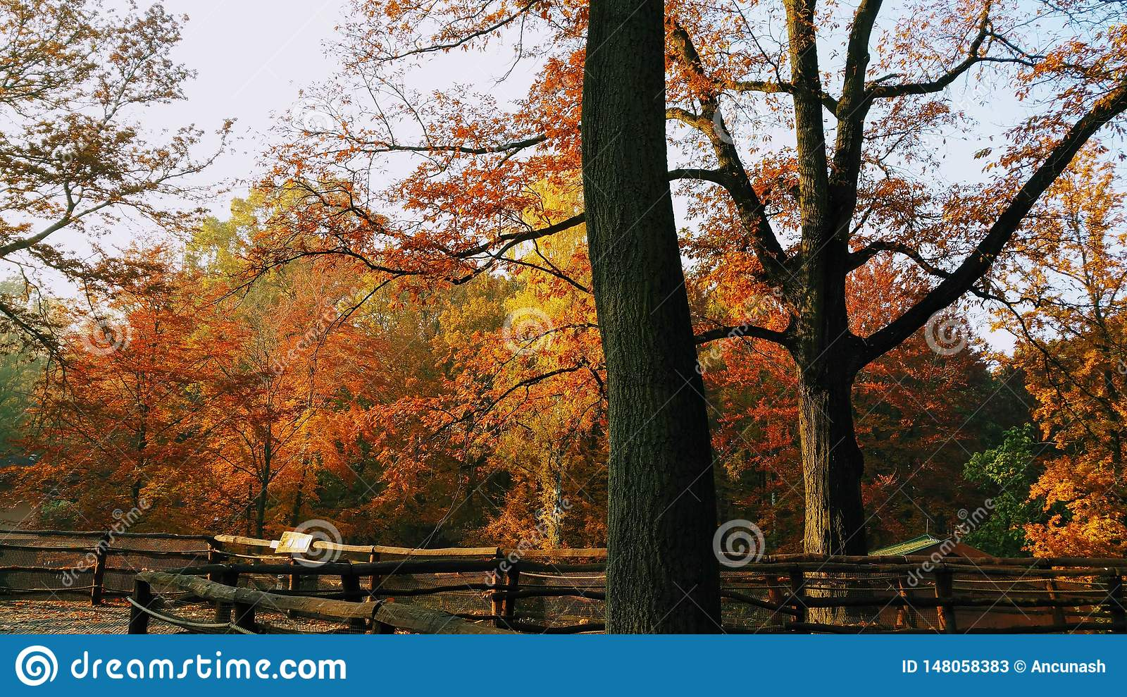 Jour ensoleillé stupéfiant d automne dans la forêt