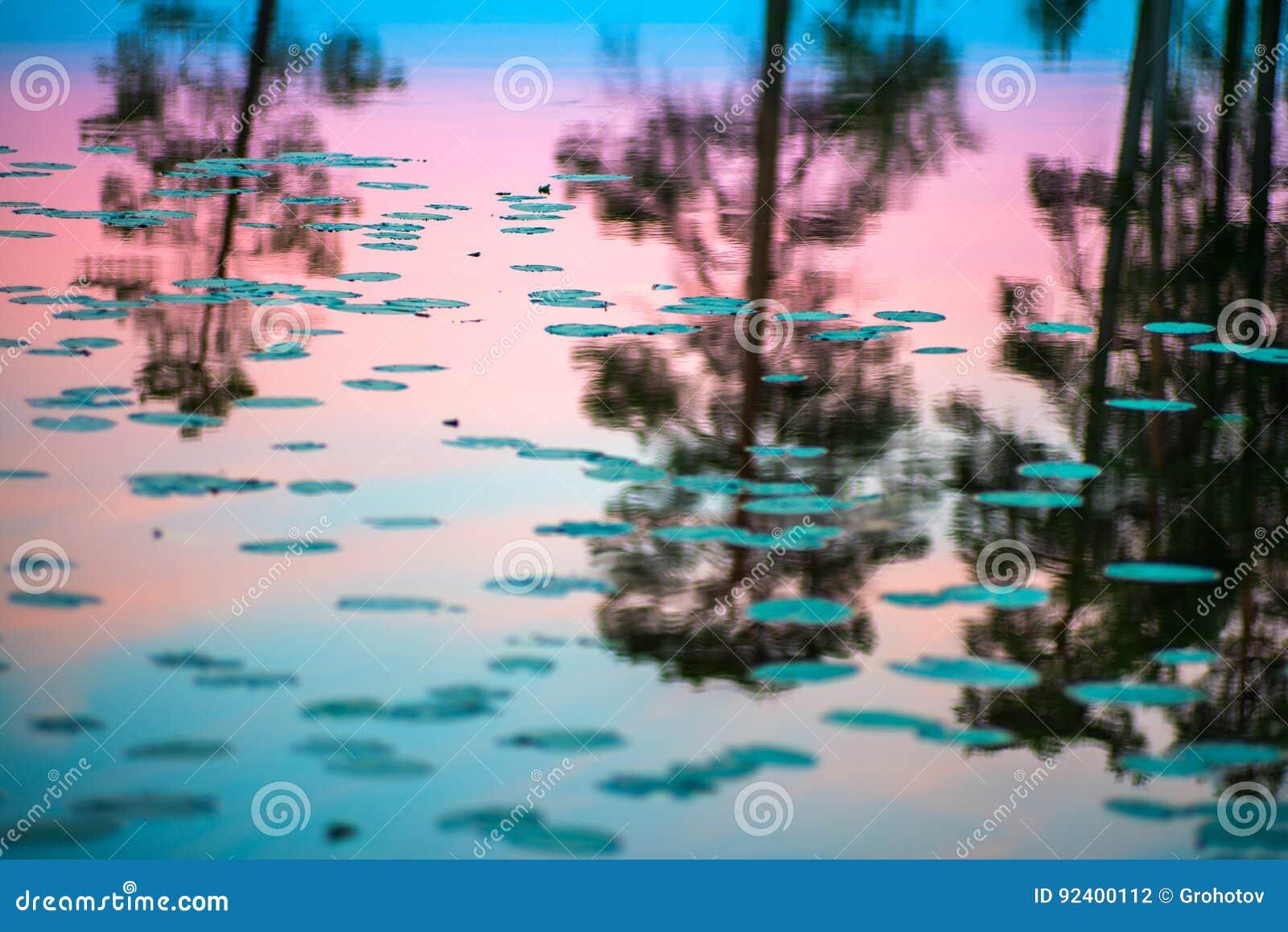 Jour polaire sans fin dans l Arctique Une belle réflexion du rose de ciel nocturne et arbres dans une eau brillante du lac