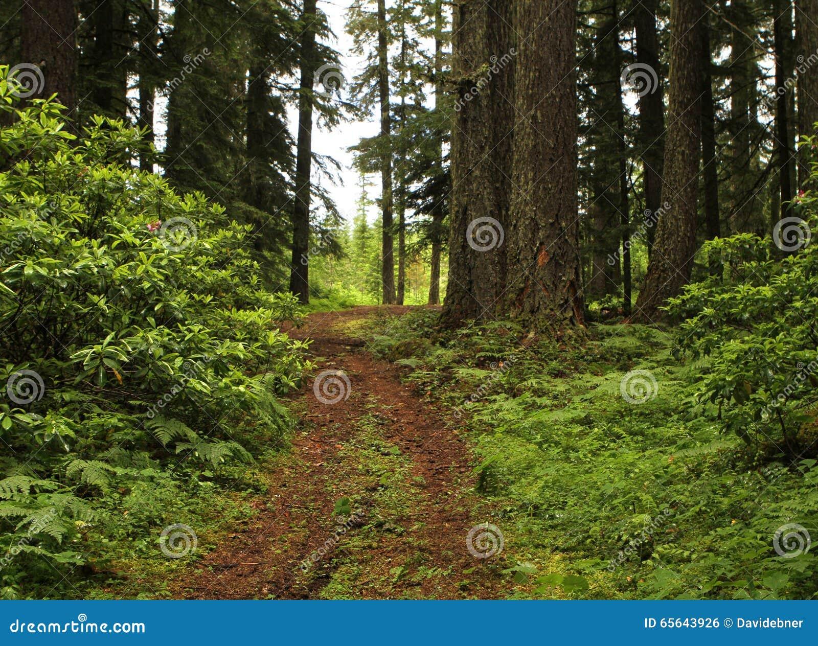 Journal de forêt