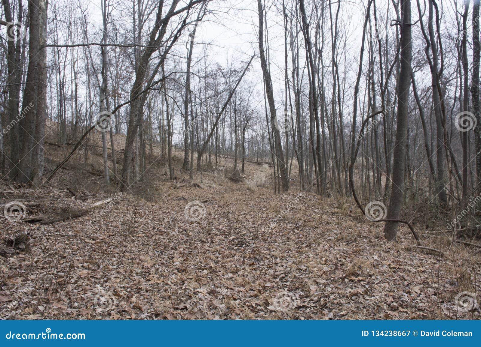 Journal de hausse dans la forêt