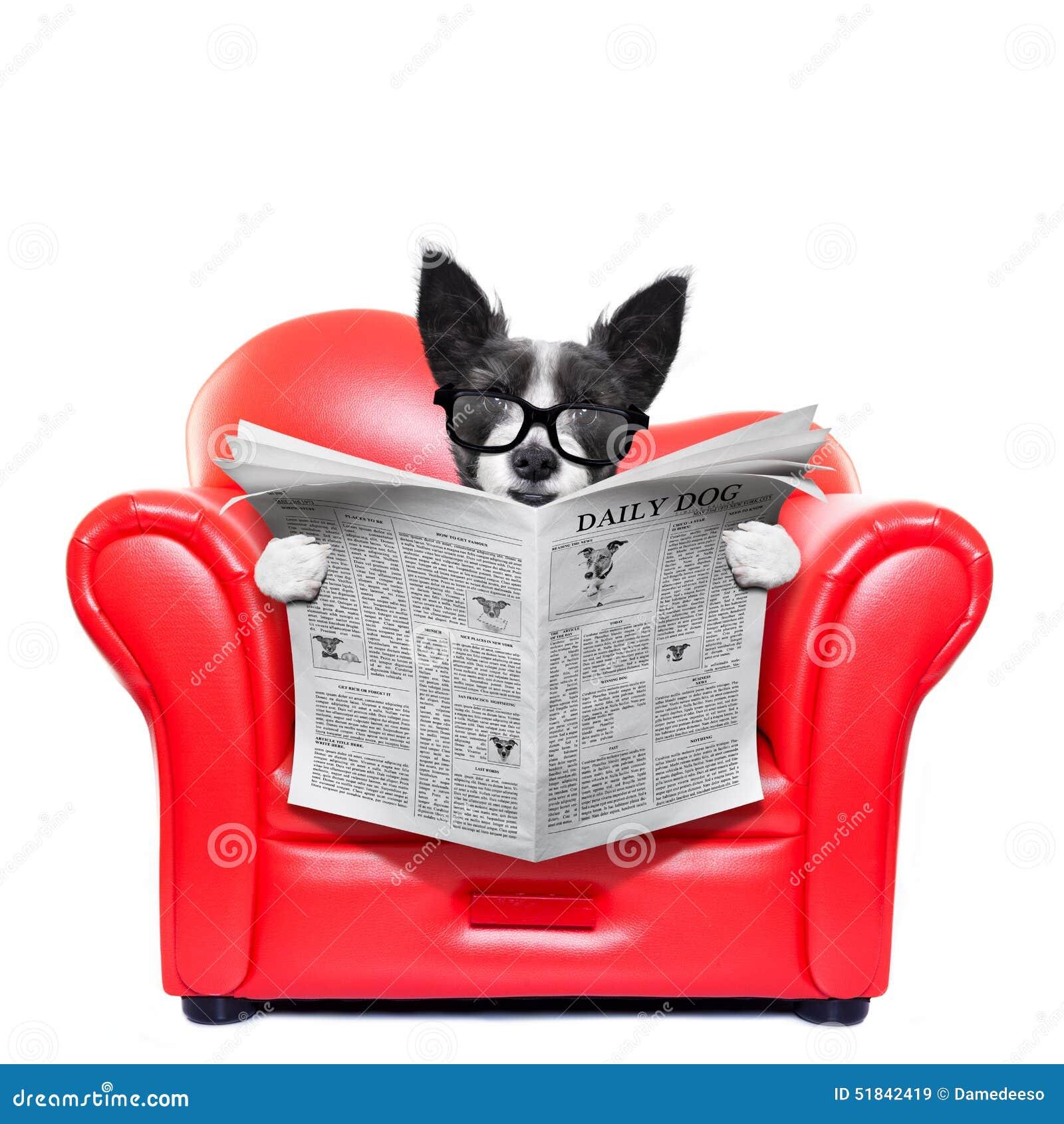 Journal de lecture de chien photo stock image 51842419 for Sur le canape ou dans le canape