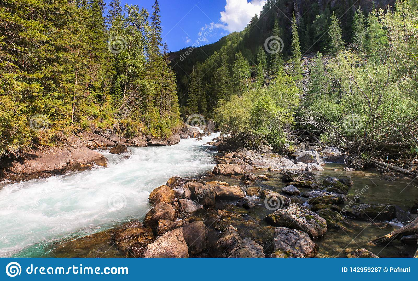 Journey through the wild nature of the Altai.
