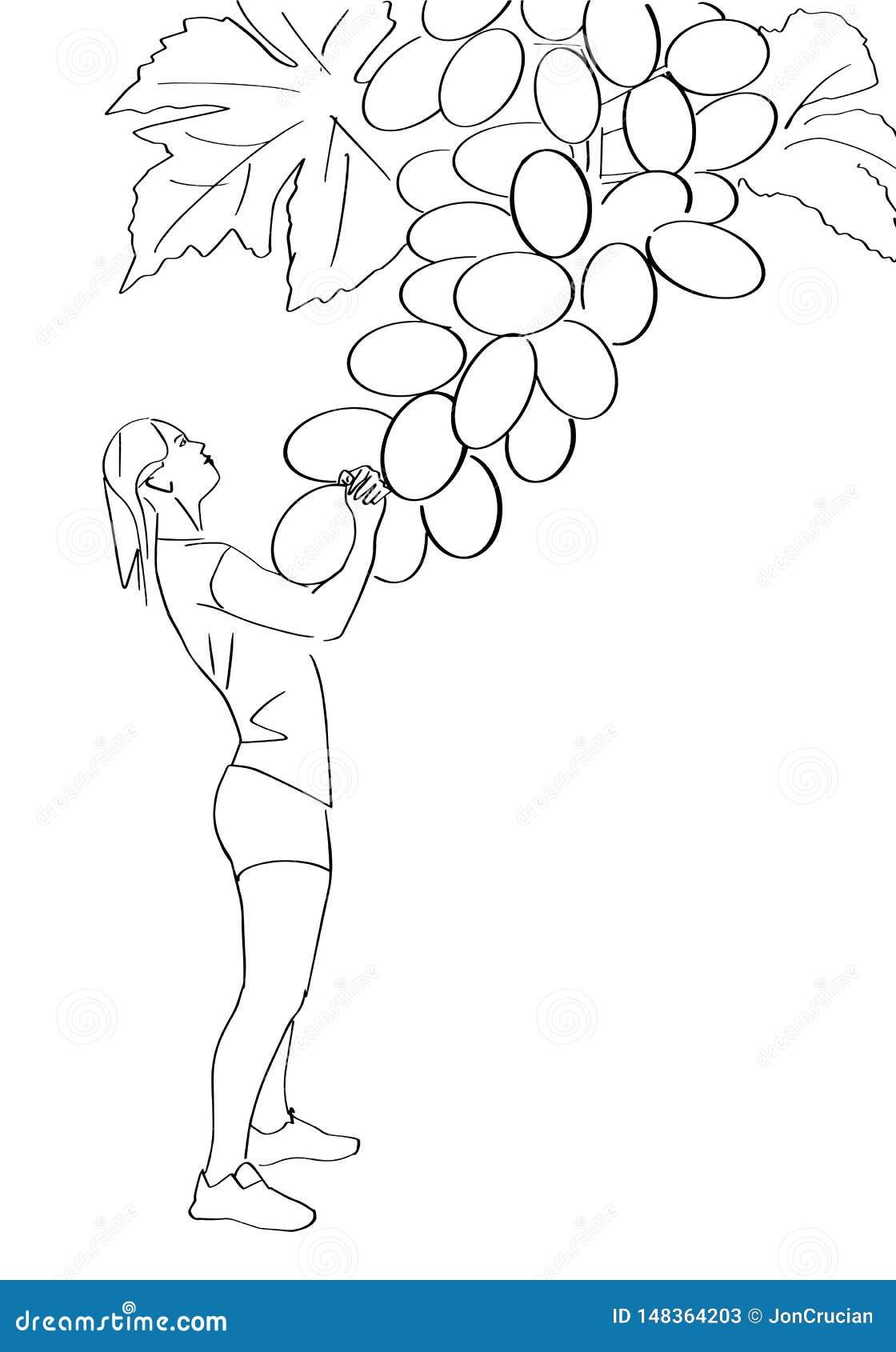A jovem mulher puxa uma uva