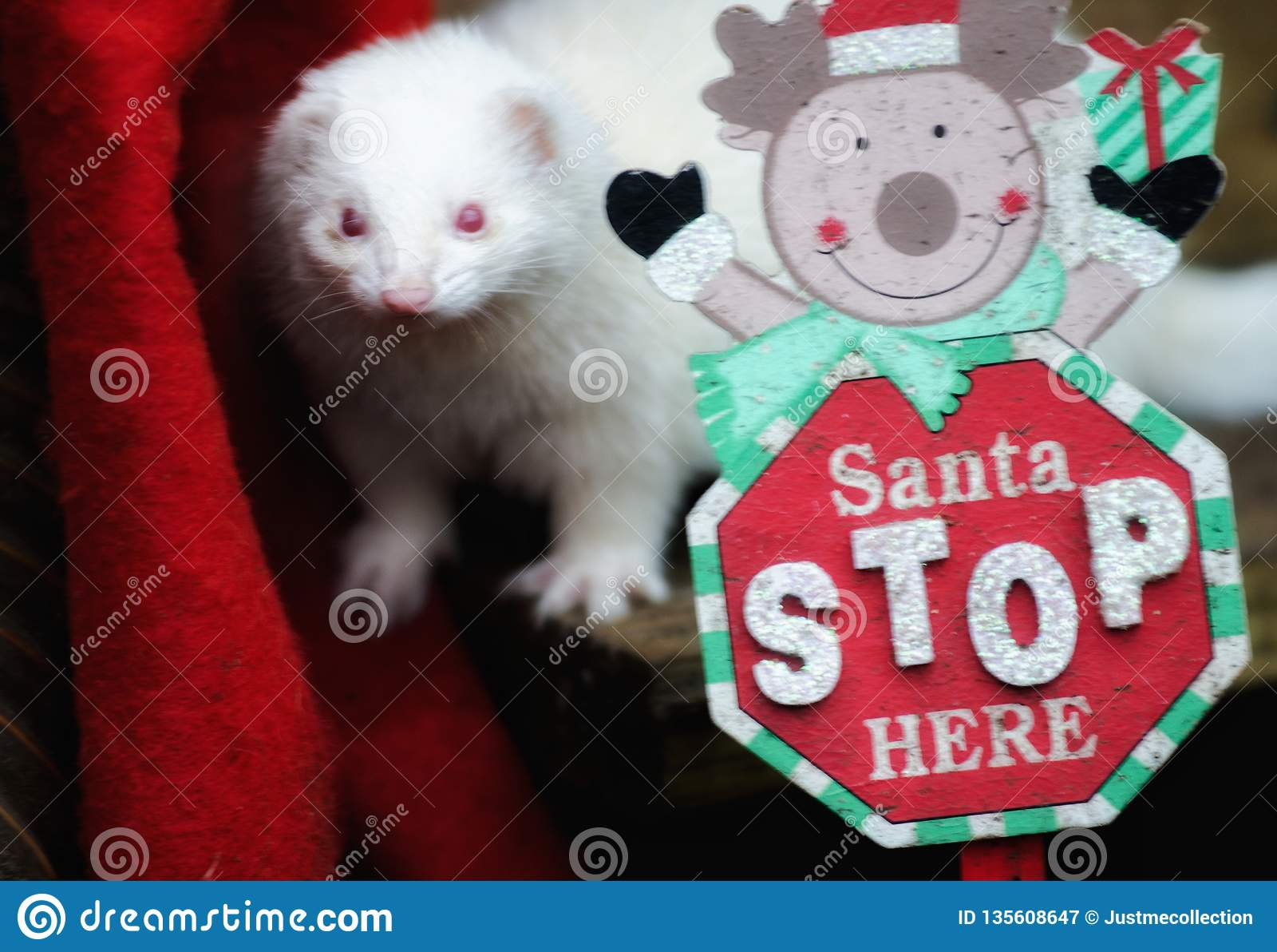 Christmas Ferret.Joy Of Christmas Stock Image Image Of Christmas Chrstmas