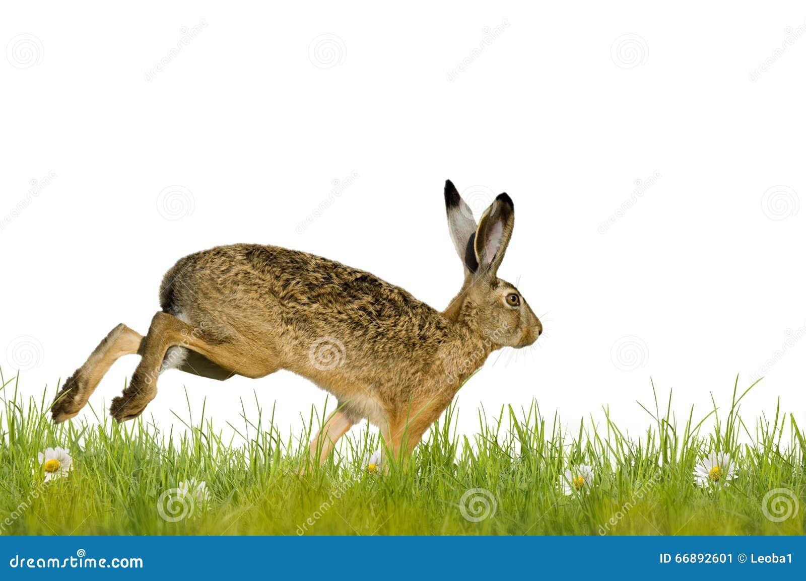 Joyeuses Pâques ; lapin de Pâques