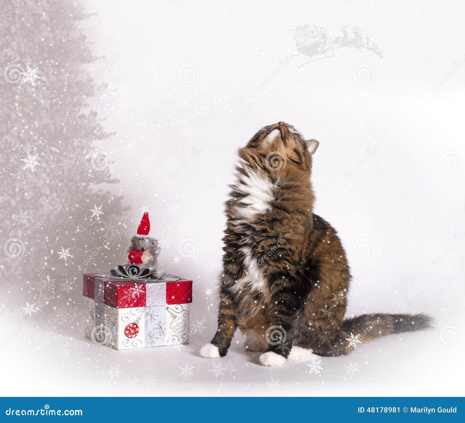 Joyful Cat Looking for Santa