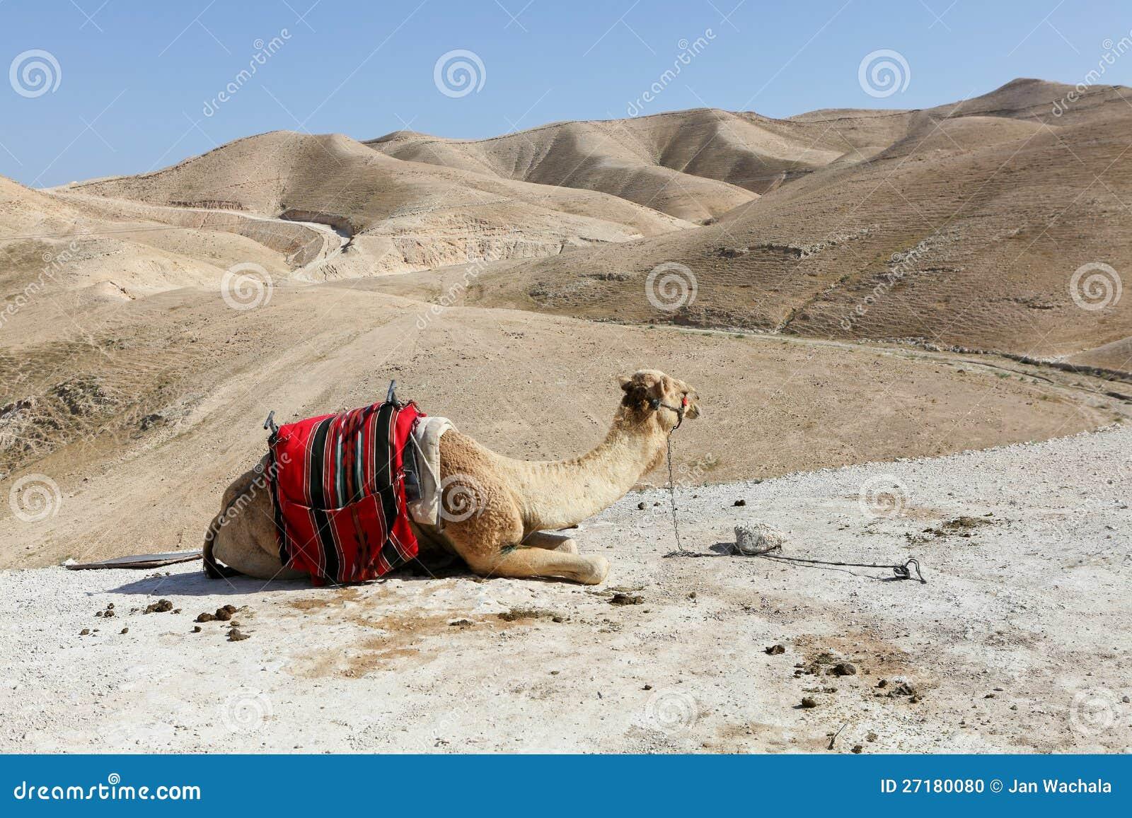 Judea沙漠