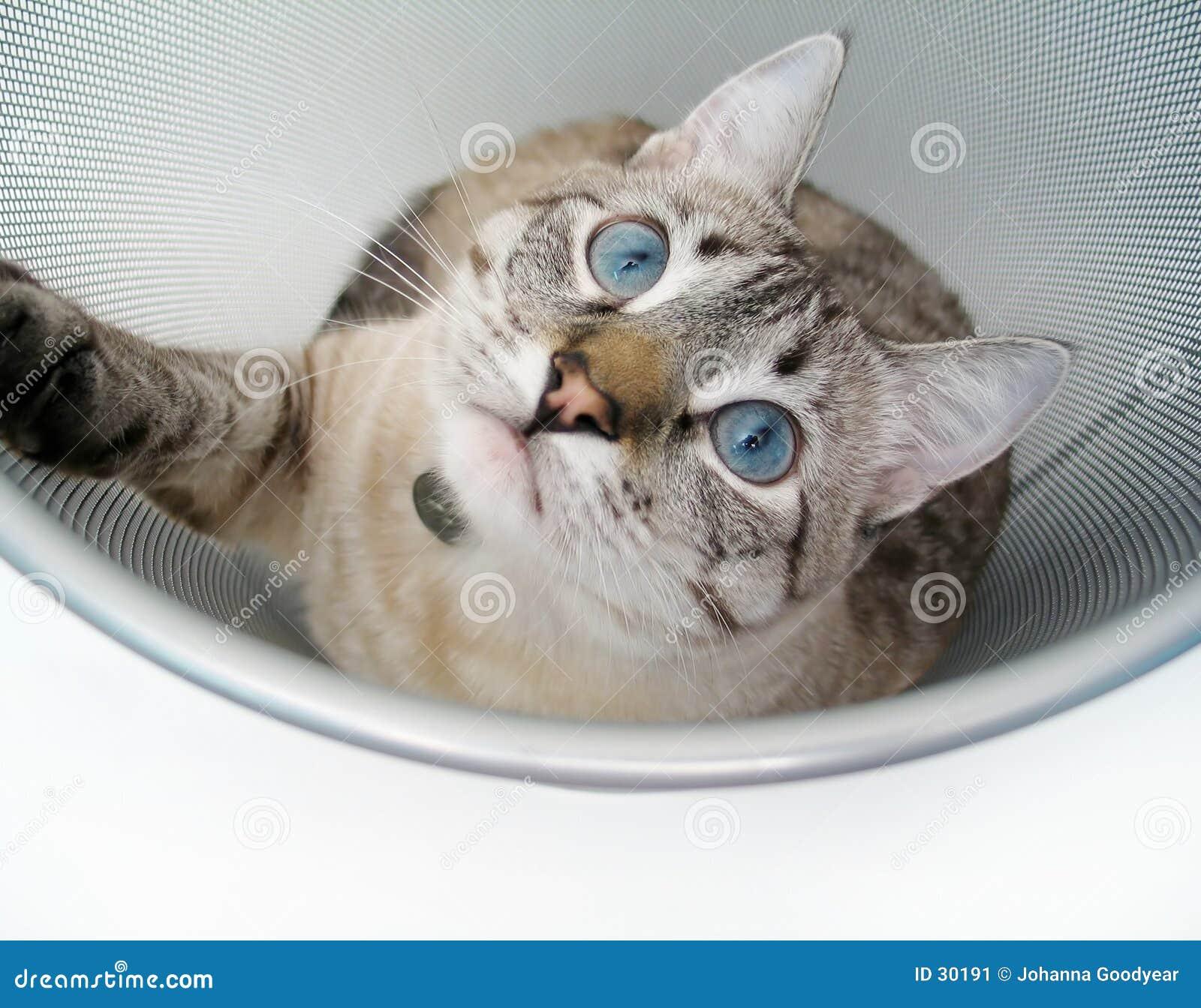 Download Juego 4 del gato imagen de archivo. Imagen de piel, puss - 30191