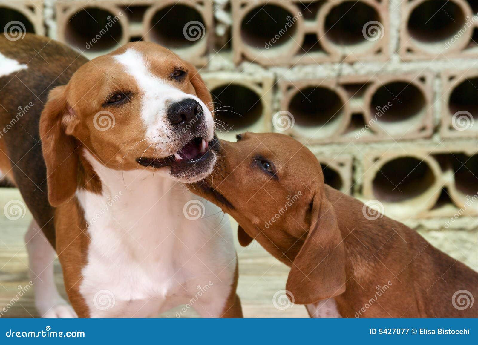 Juego de dos perros