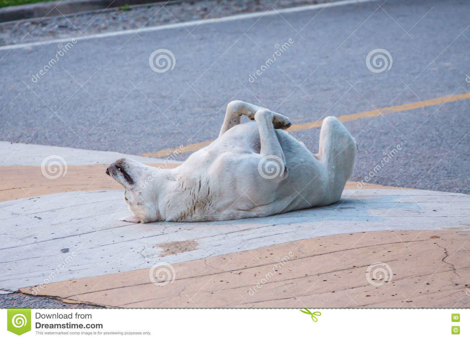 Perro muerto en villa de magallanes de comuna de Renca