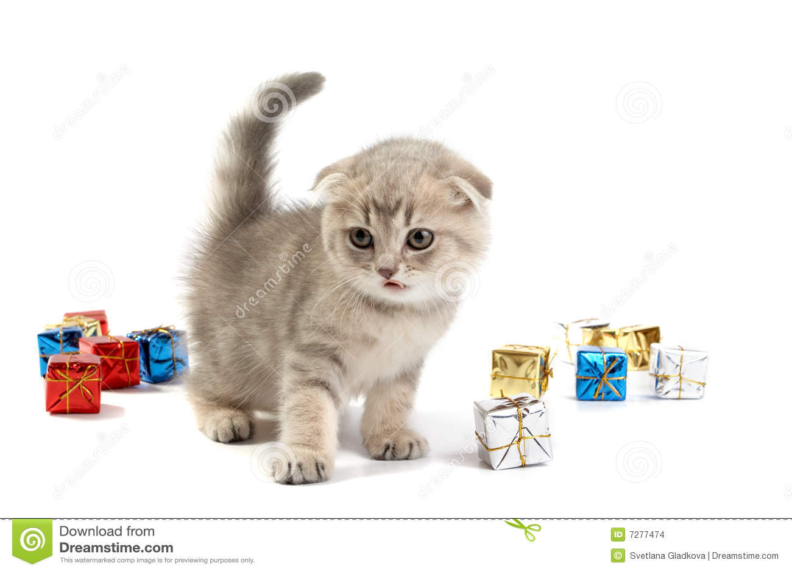 Juegos del gatito con los rectángulos de regalo