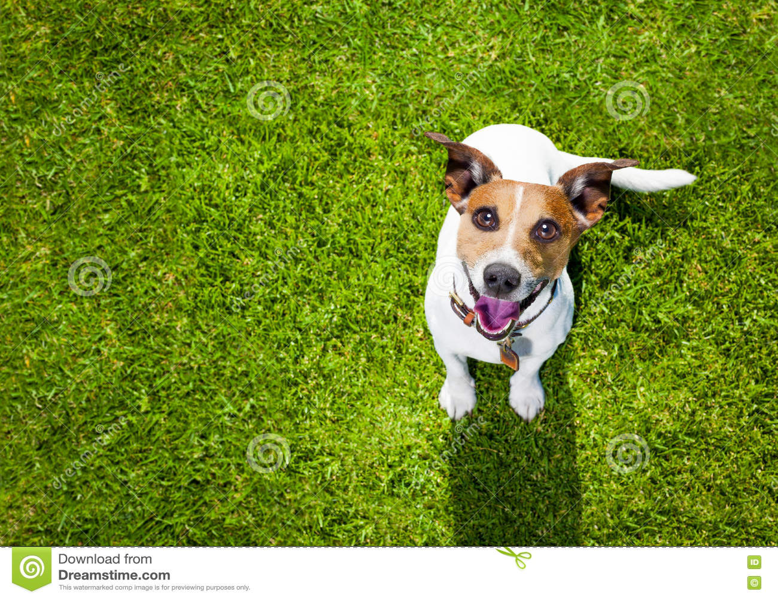 Juegos del perro con el dueño que mira para arriba