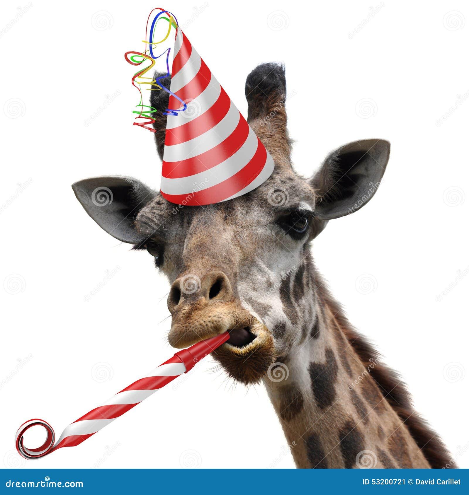 Juerguista divertido de la jirafa que hace una cara tonta y que sopla un noisemaker