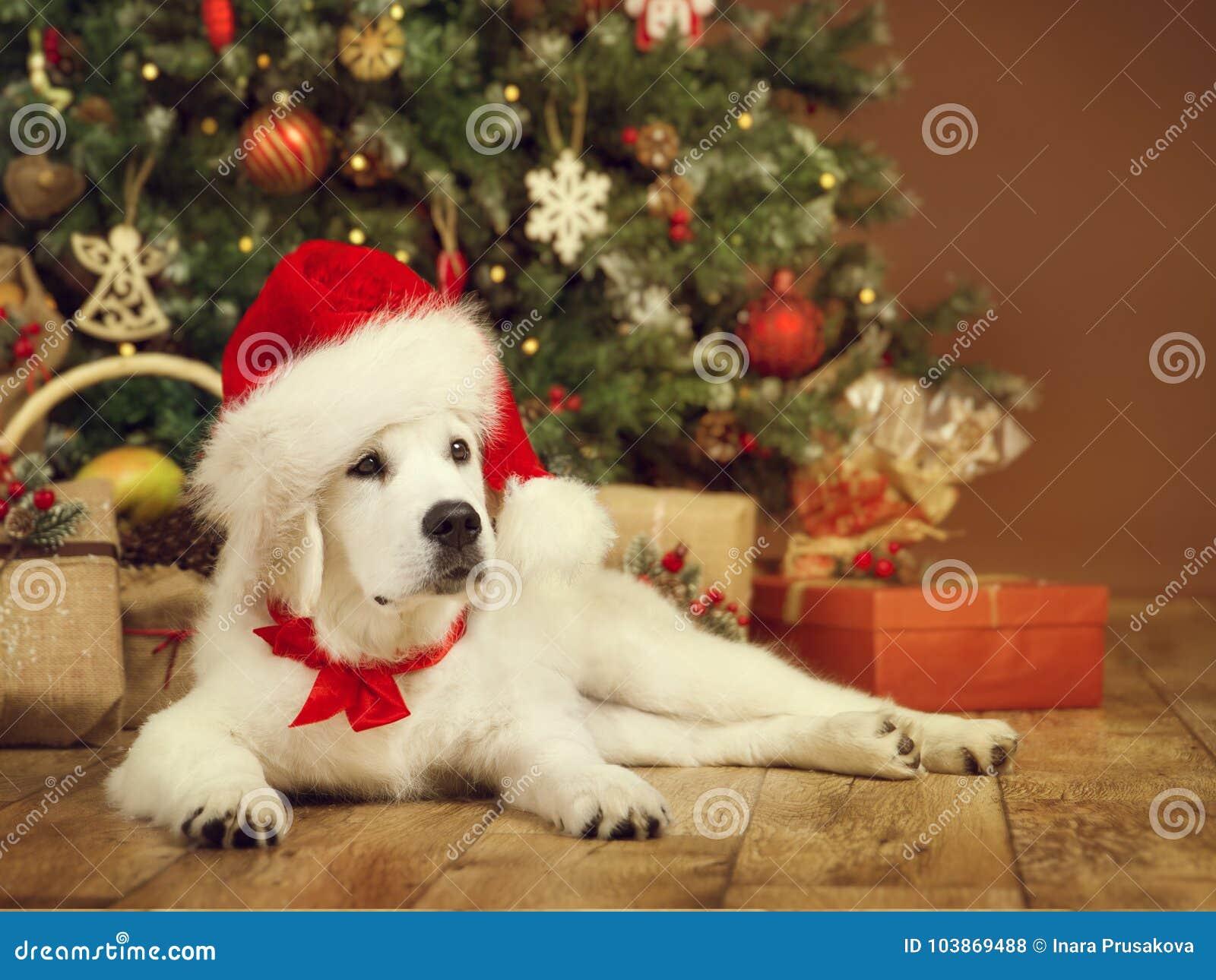 Jul dog, den vita valpapportörn i den santa hatten, xmas-träd