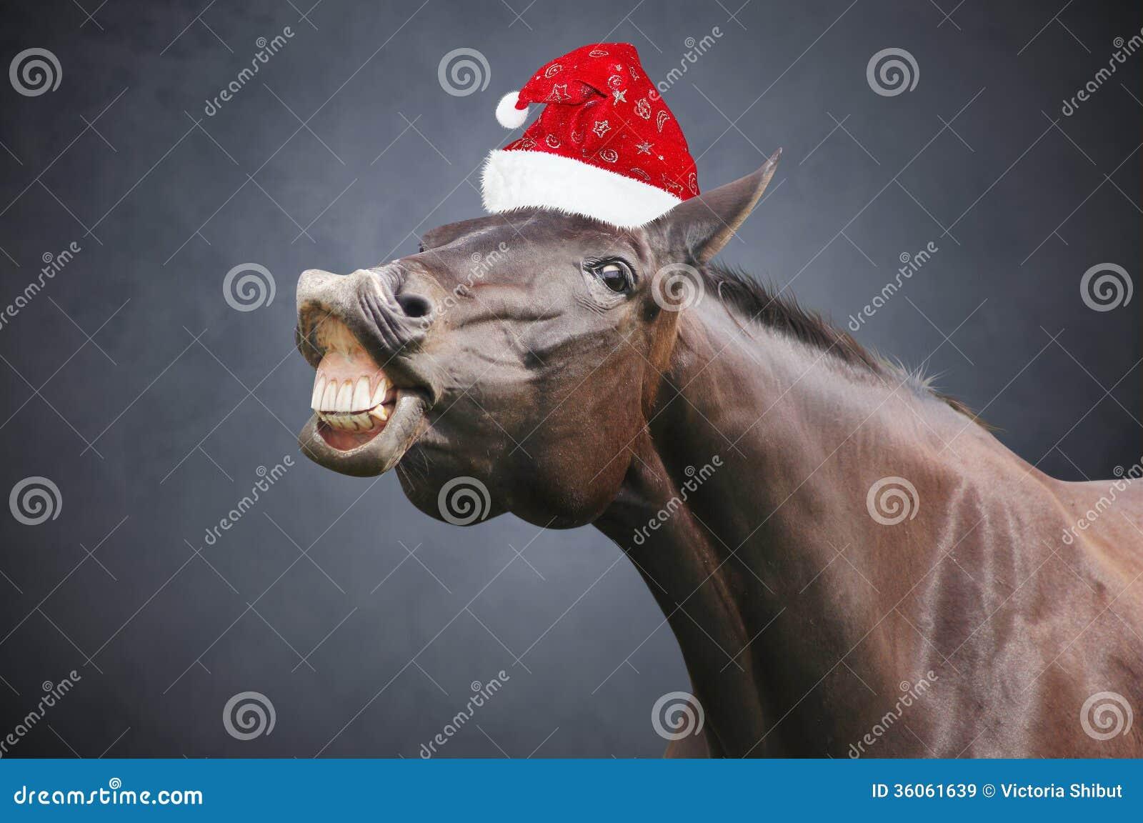 Julhäst med hatten