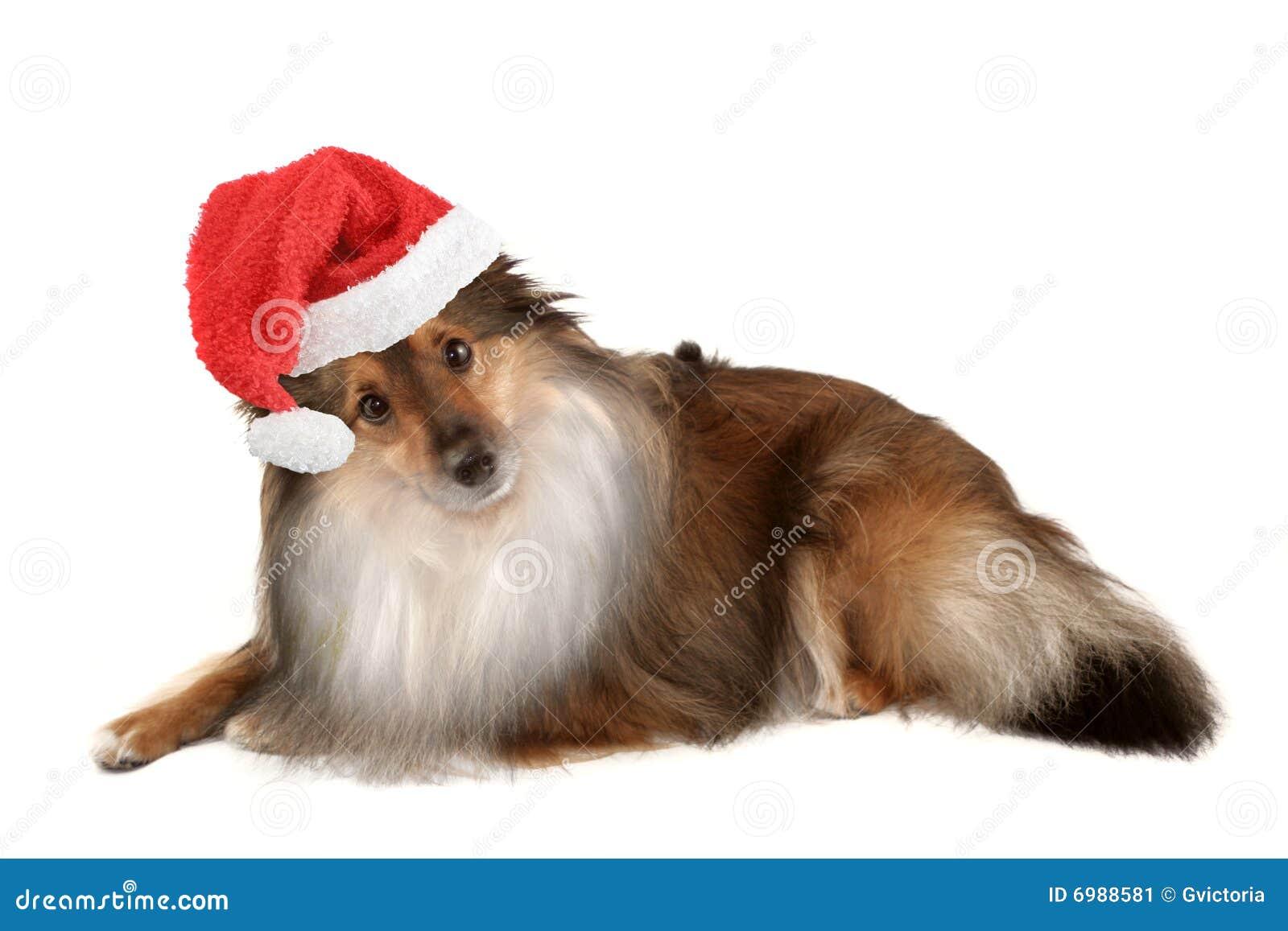 Julhundstående