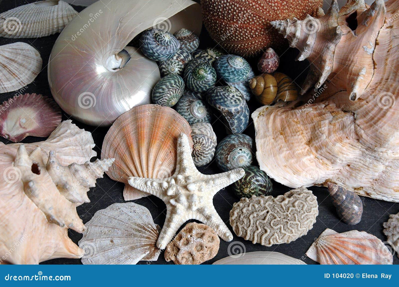 Jumble do Seashell