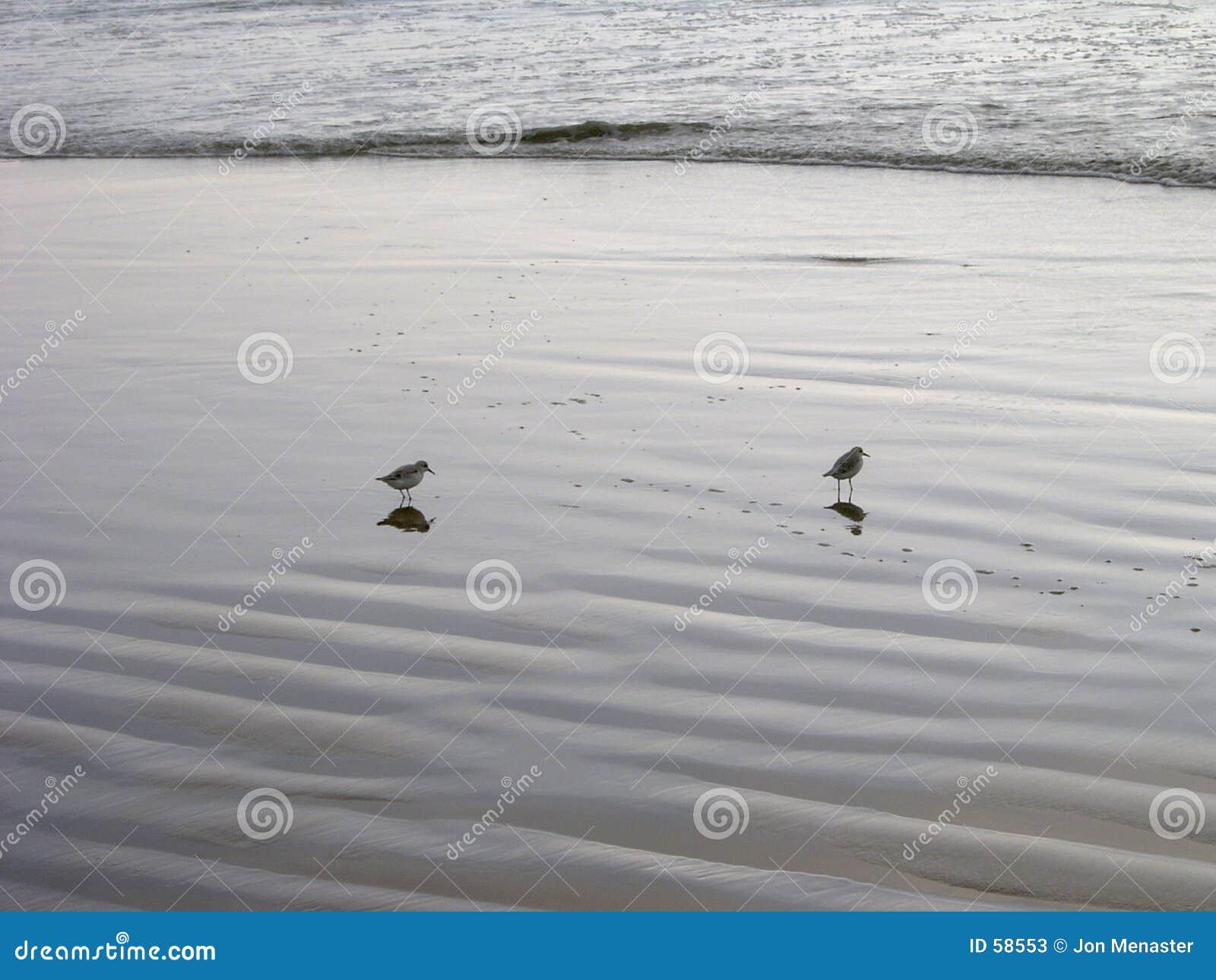 Download Jumeaux image stock. Image du réflexion, océan, méridional - 58553