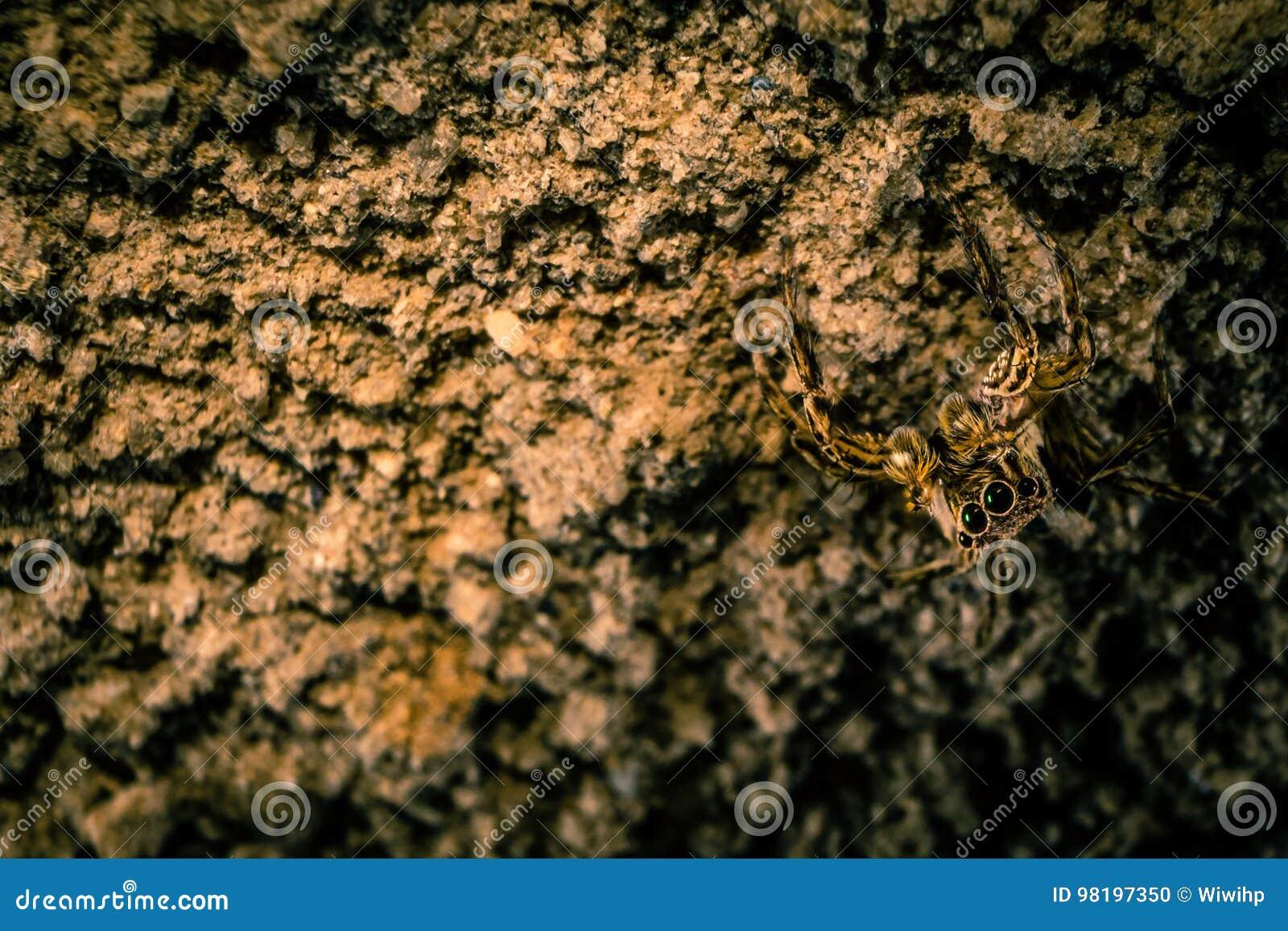 Jumper Spider Camouflage