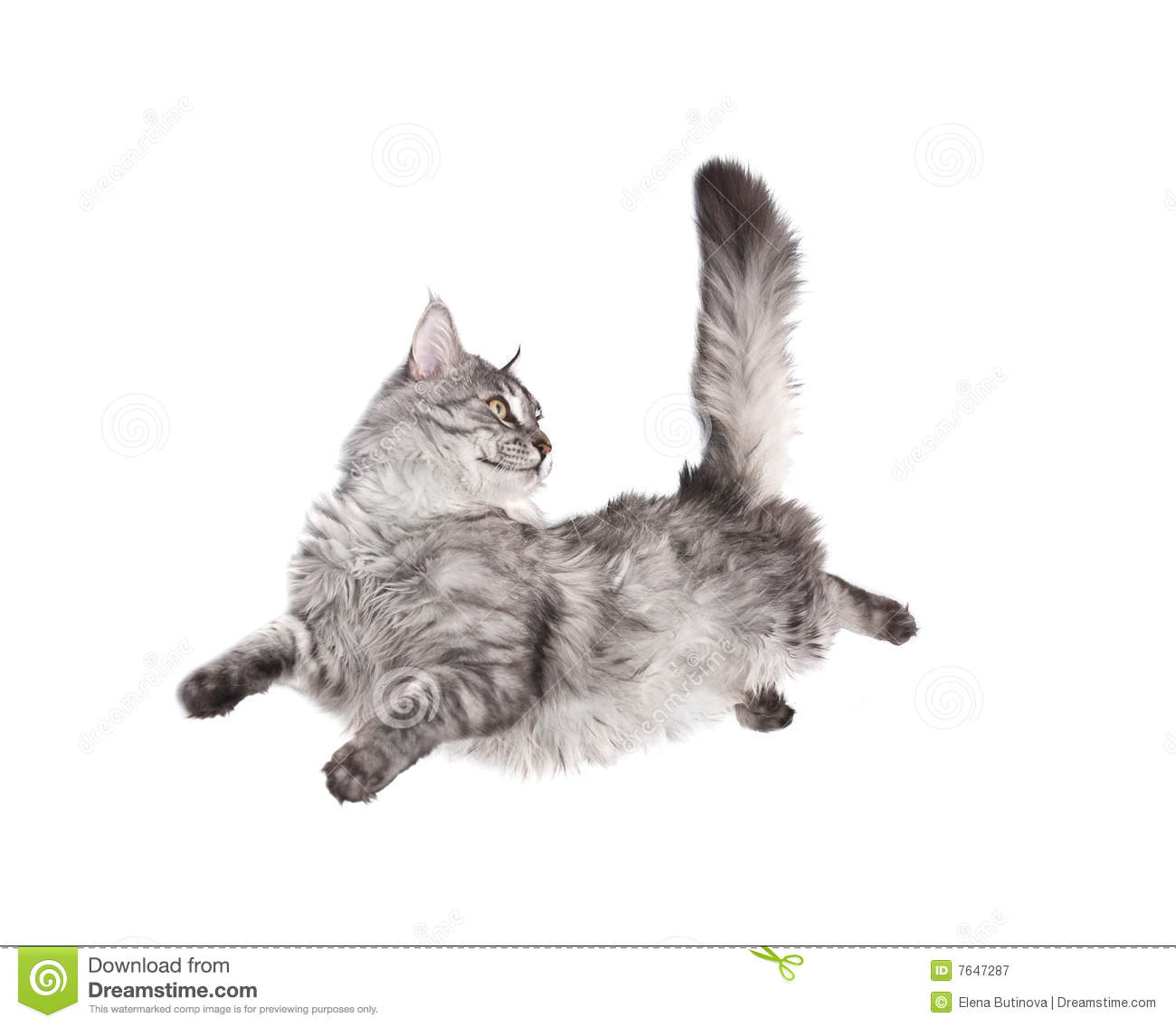 Jumping cat royalty free stock photography image 7647287