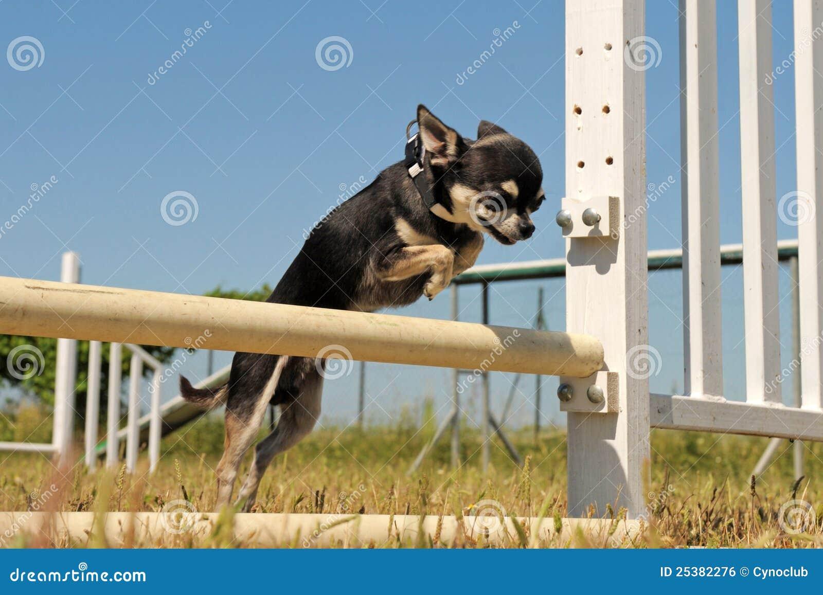 Dog Agility Training Plans