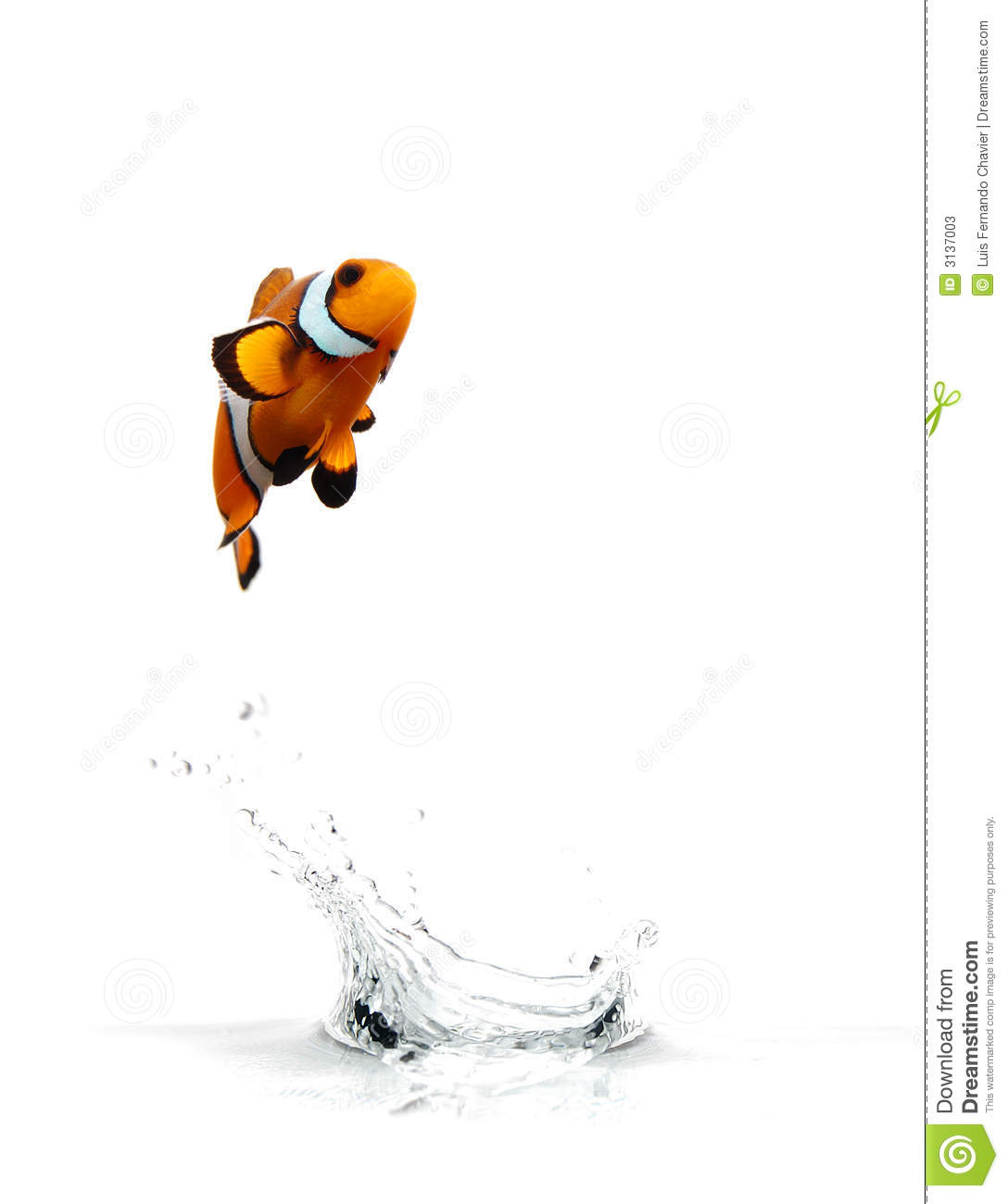 Jumping clownfish stock image image of background ocean for Dream about fish out of water