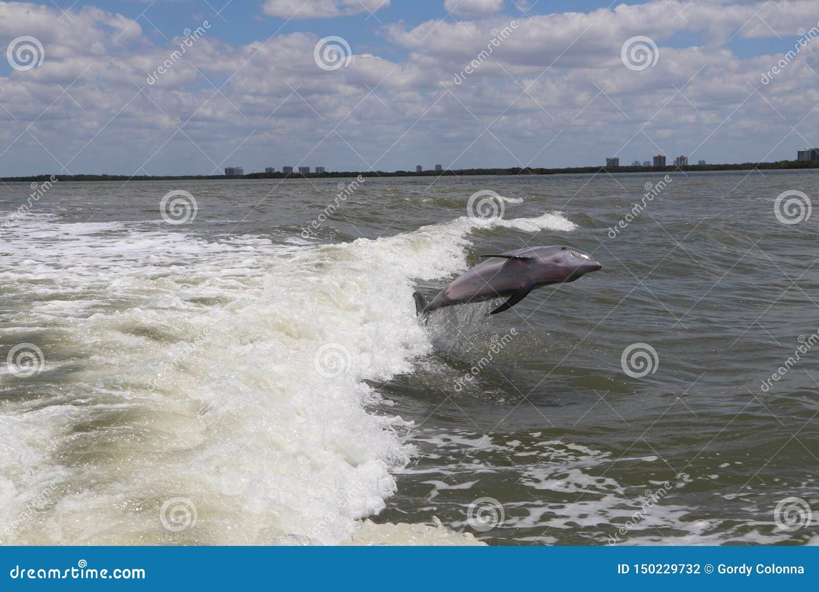 Jumping Delphin