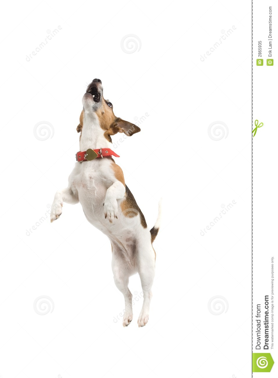 Jumping Dog Royalty Free Stock Photo - Image: 2865935