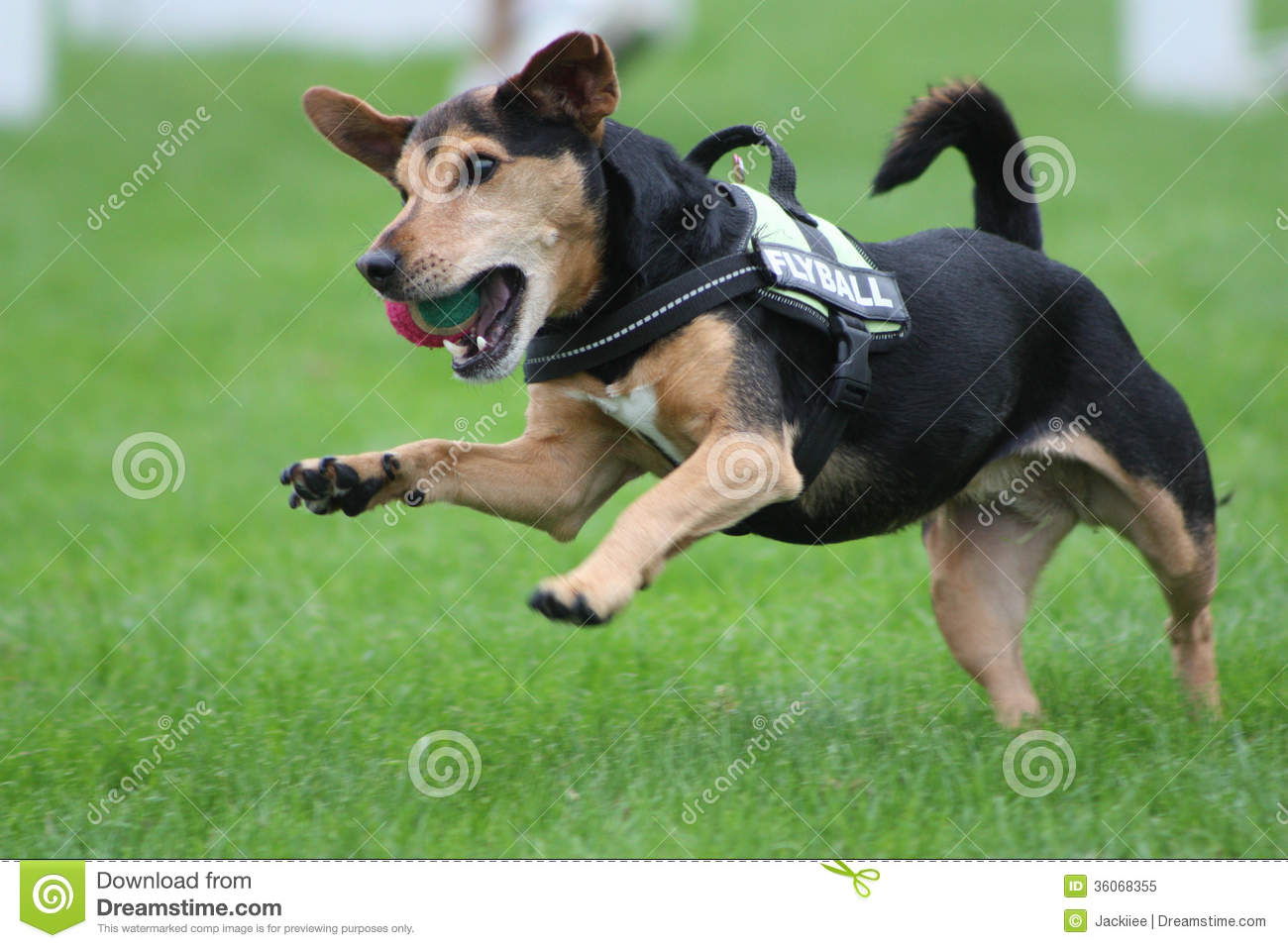 Jumping Dog Royalty Free Stock Photo - Image: 36068355