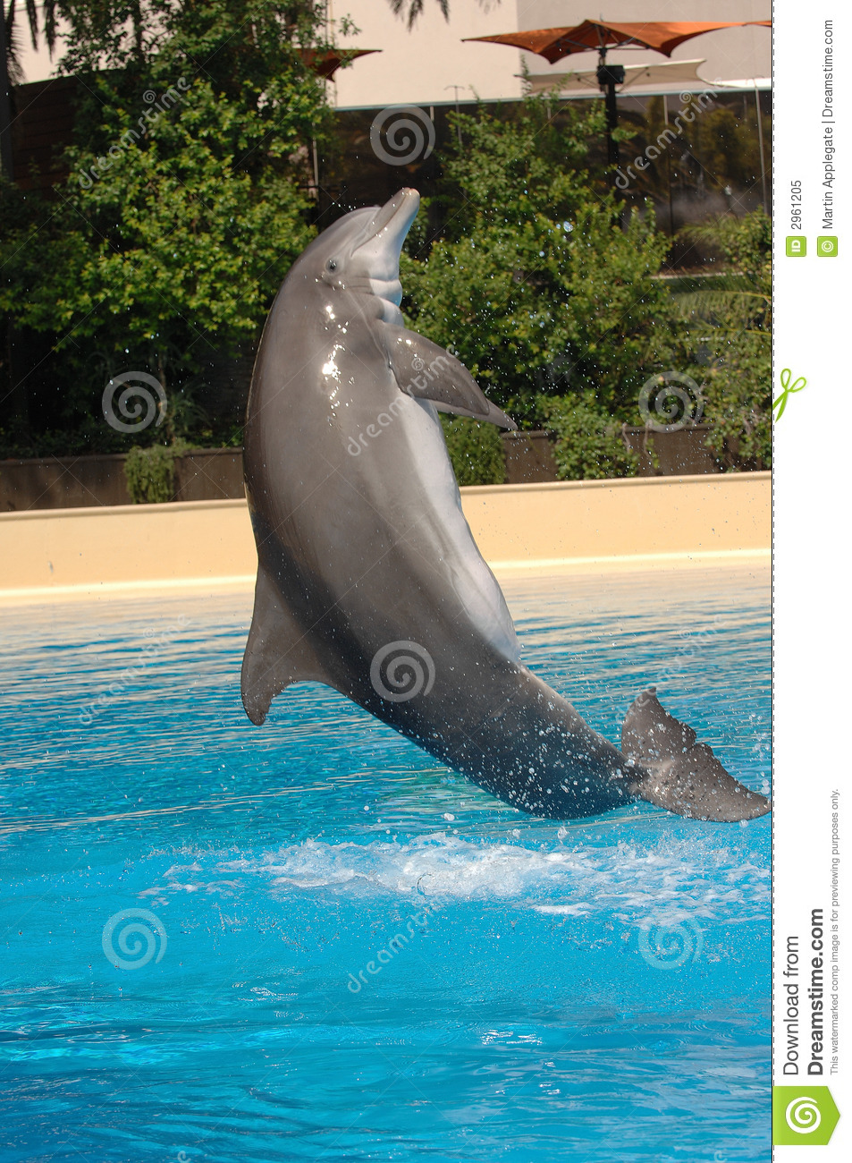 Download Jumping Dolphin stock image. Image of life, nosed, fish - 2961205