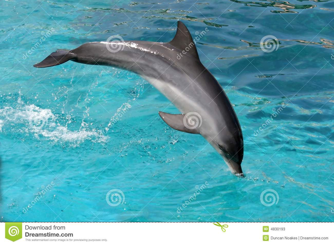 Download Jumping Dolphin stock image. Image of nose, performing - 4830193
