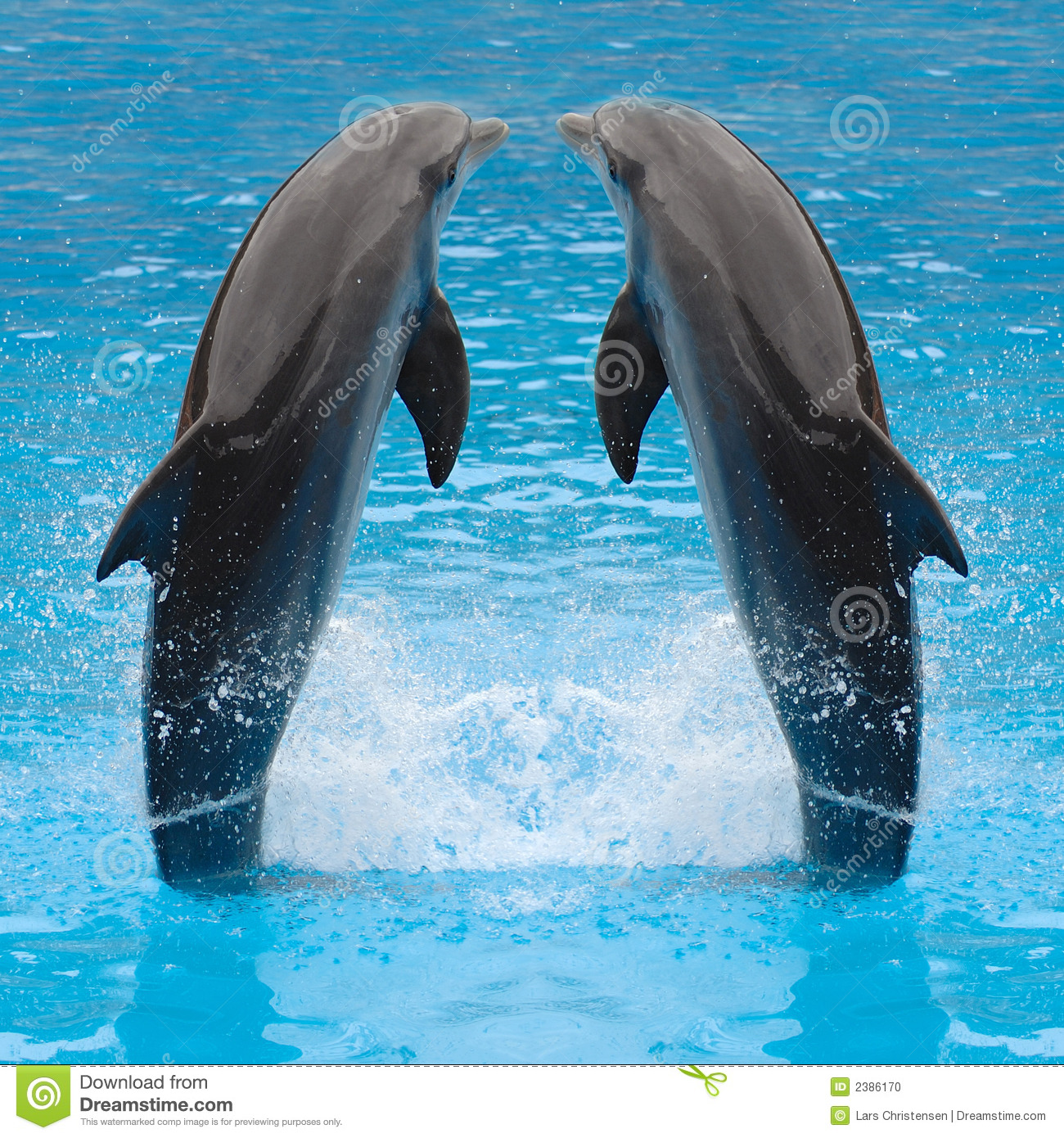 Jumping Dolphin Twins Stock Photo Image Of Jump Animal