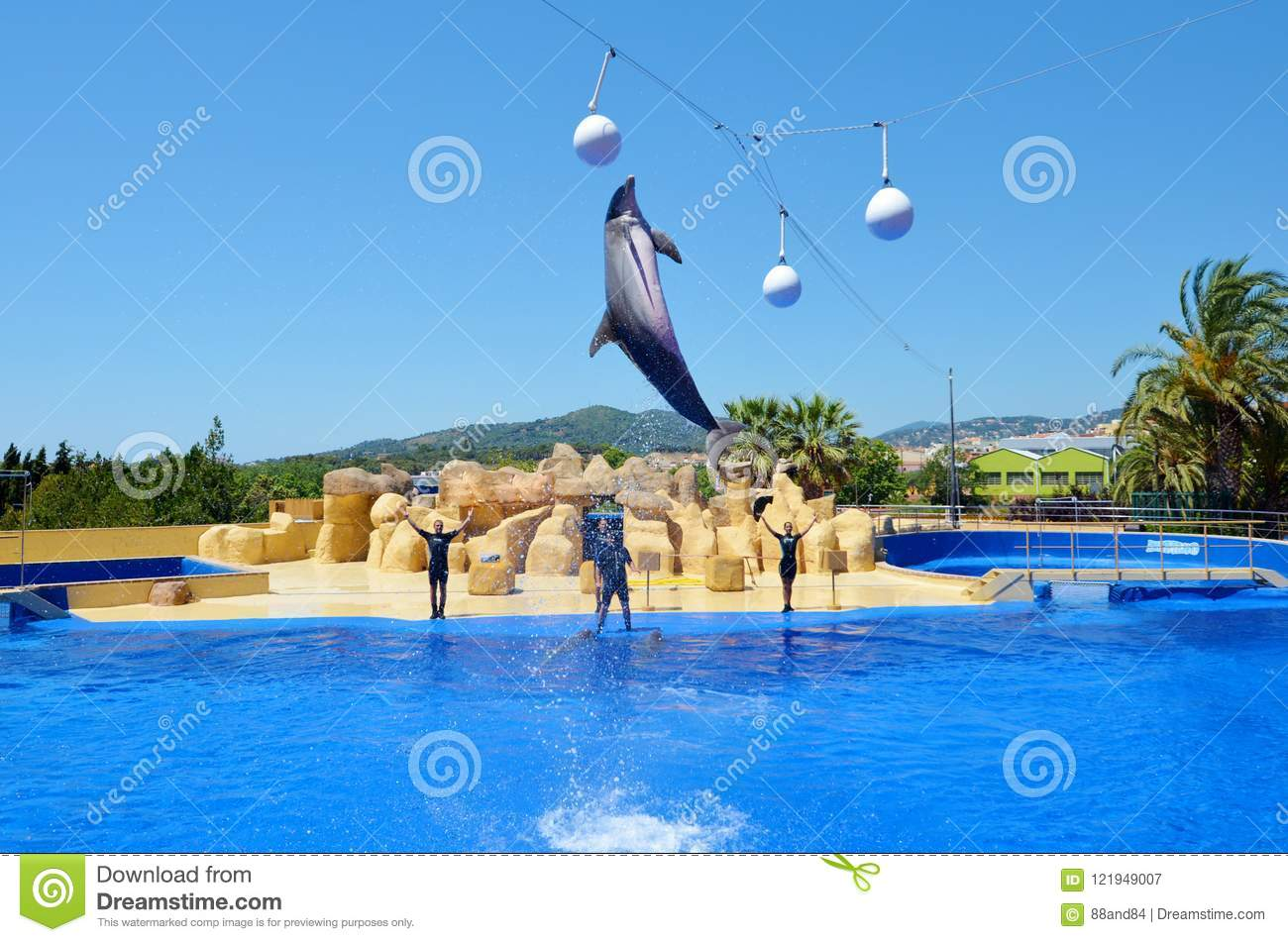 Jumping dolphins at Dolphin Show in a Zoo