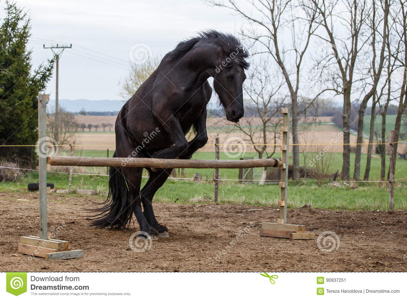 Jumping Friesian Horse Equine Sport Stock Image Image Of Inexperienced Nature 90937251