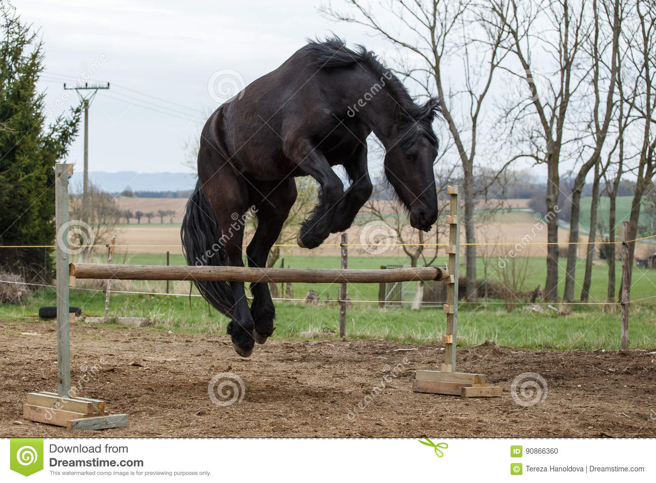 Jumping Friesian Horse Stock Photo Image Of Background 90866360