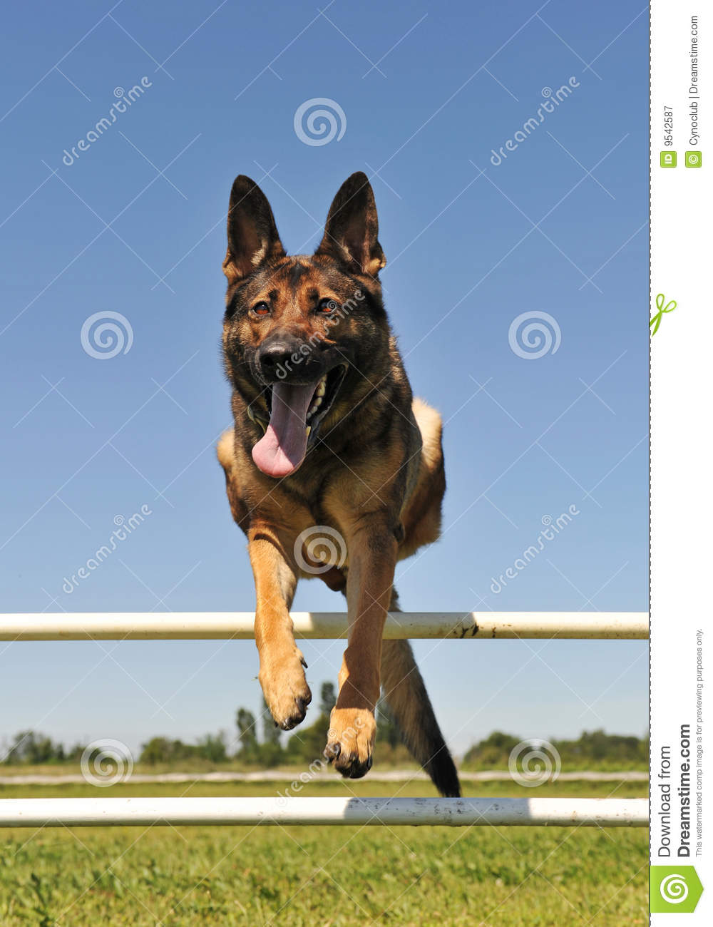 Jumping German Shepherd Royalty Free Stock Photography ...