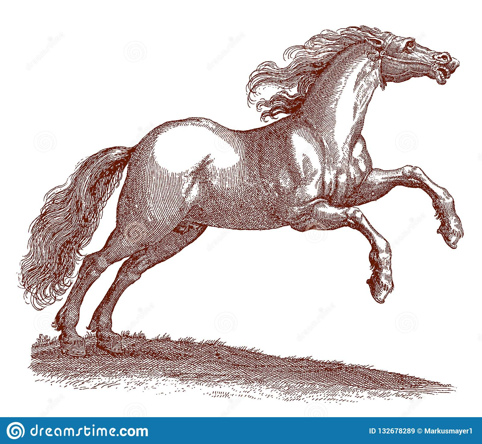 Wild Jumping Hungarian Horse Equus With A Blowing Mane Stock Vector Illustration Of Equus Antique 132678289