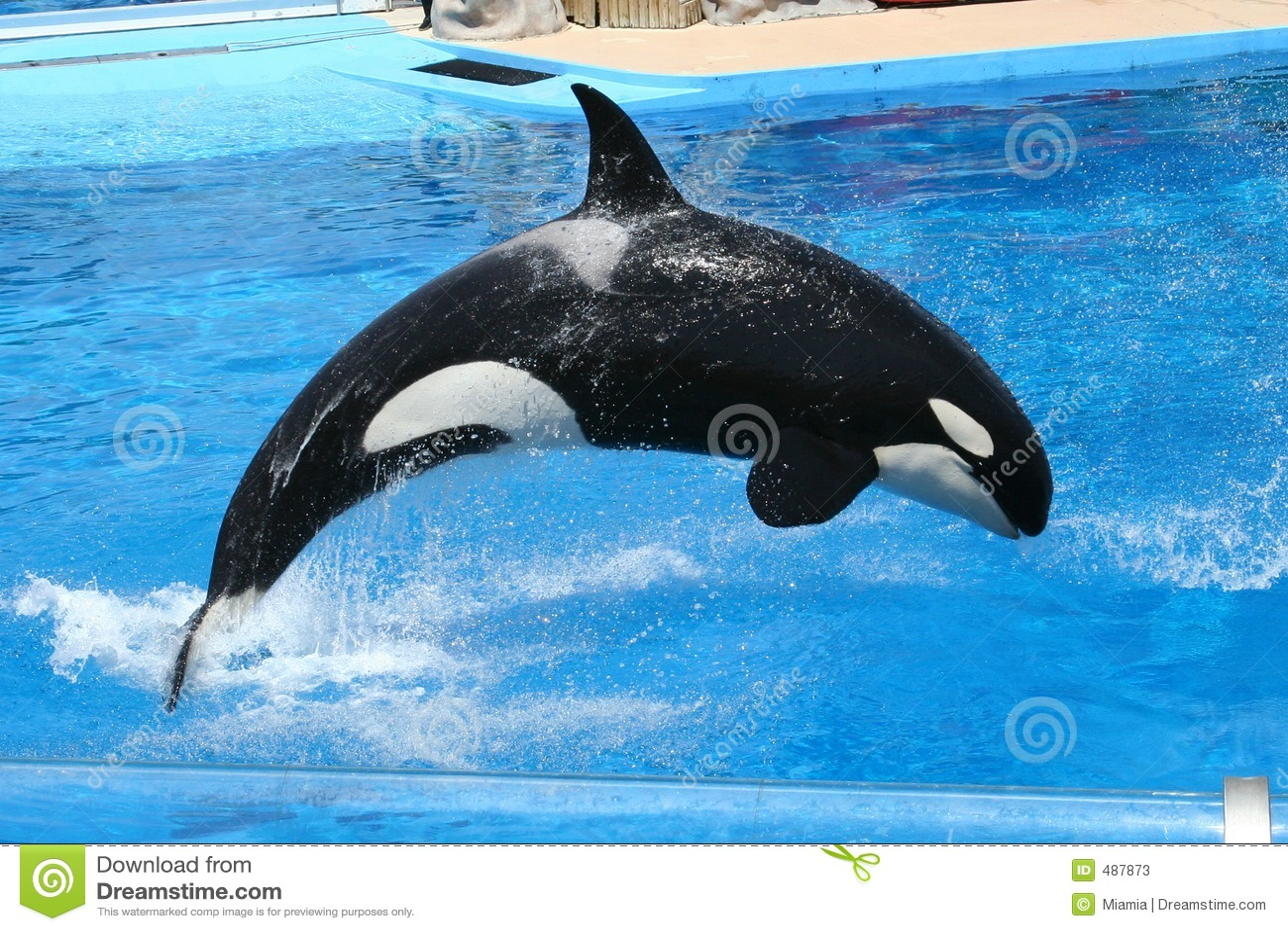 Jumping Orca Editorial Stock Photo - Image: 487873