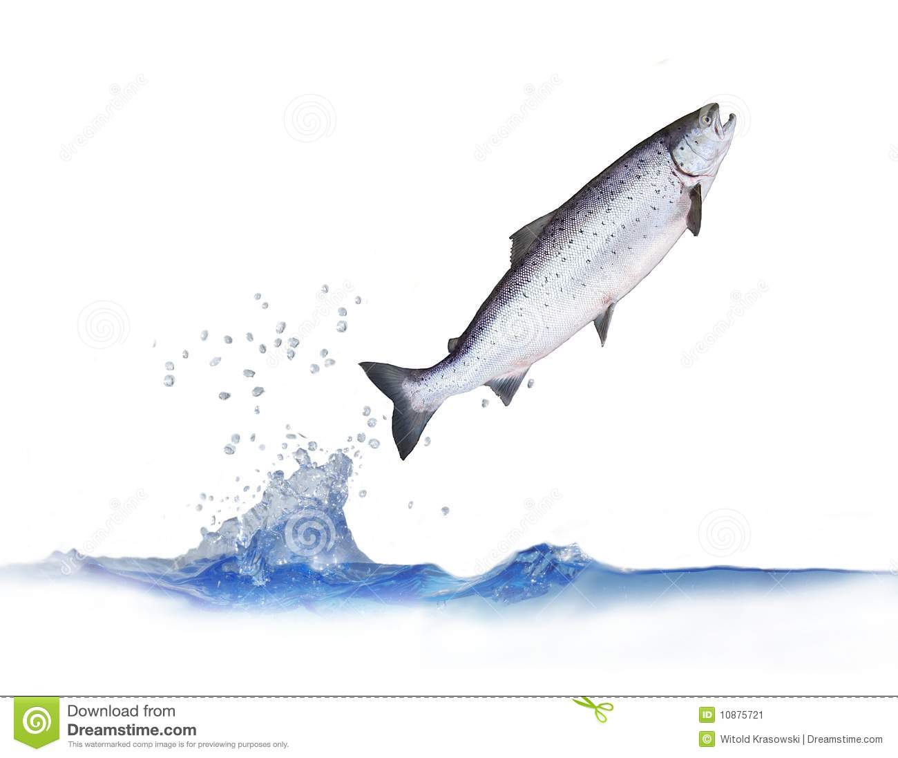 Salmon fish jumping images galleries for Salmon fish images