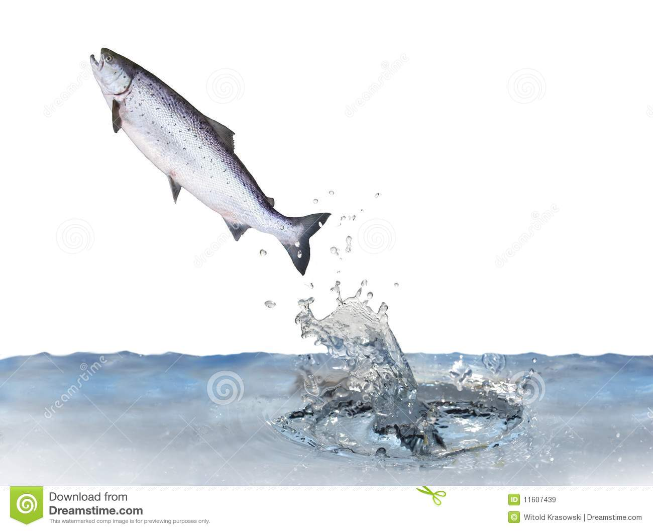 how to bank fish for salmon