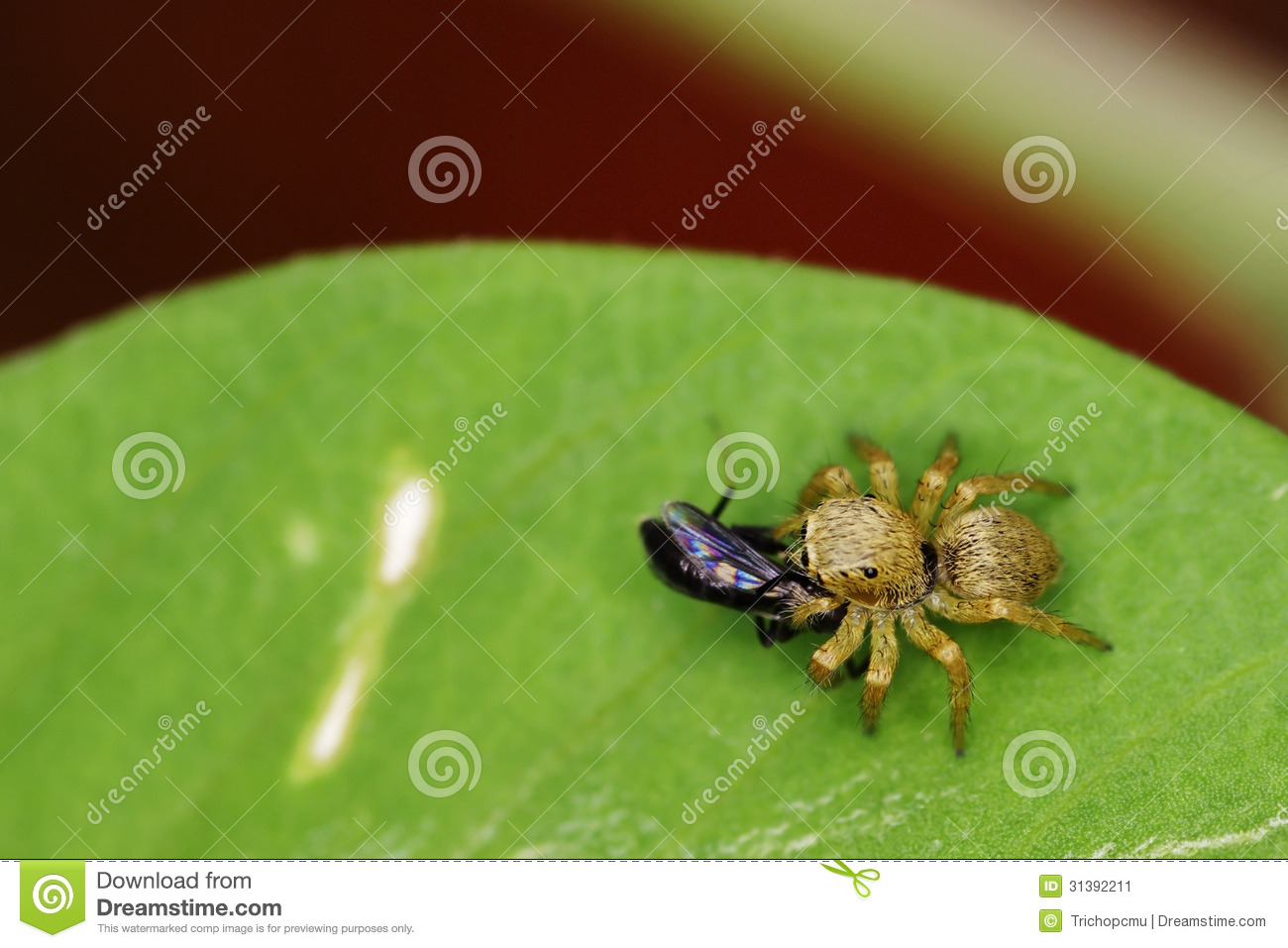 upon a spider catching a flyyyy Upon a spider catching a fly by edward taylor thou sorrow, venom elfe: is this thy play, to spin a web out of thyselfe to catch a fly for why i saw a pettish.