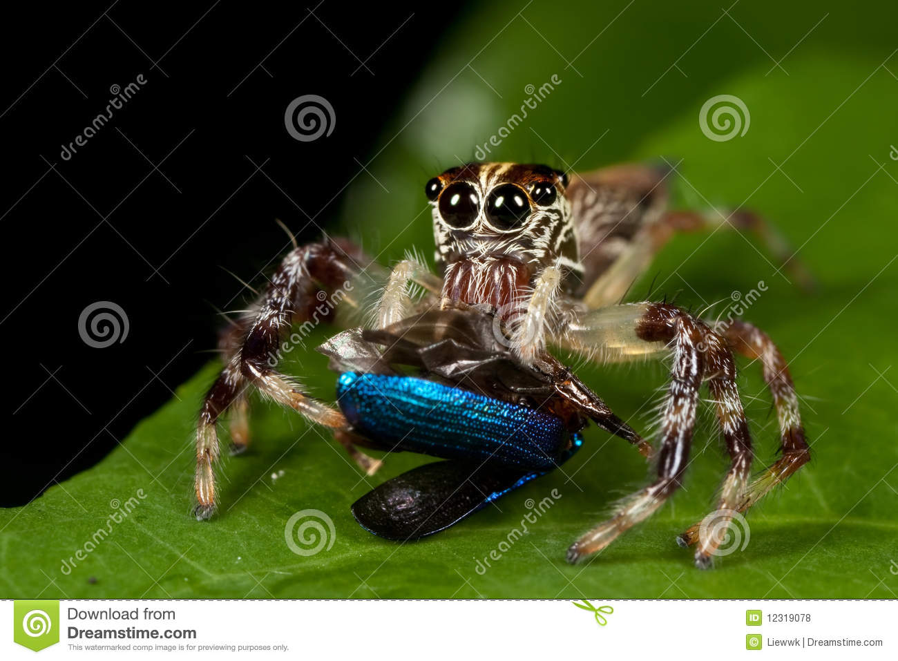 teaching a spider how to jump
