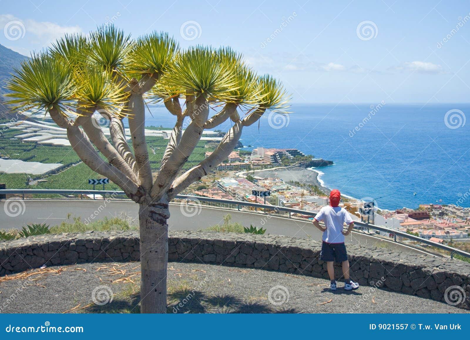 Junge, der Küstenlinie-La Palma betrachtet