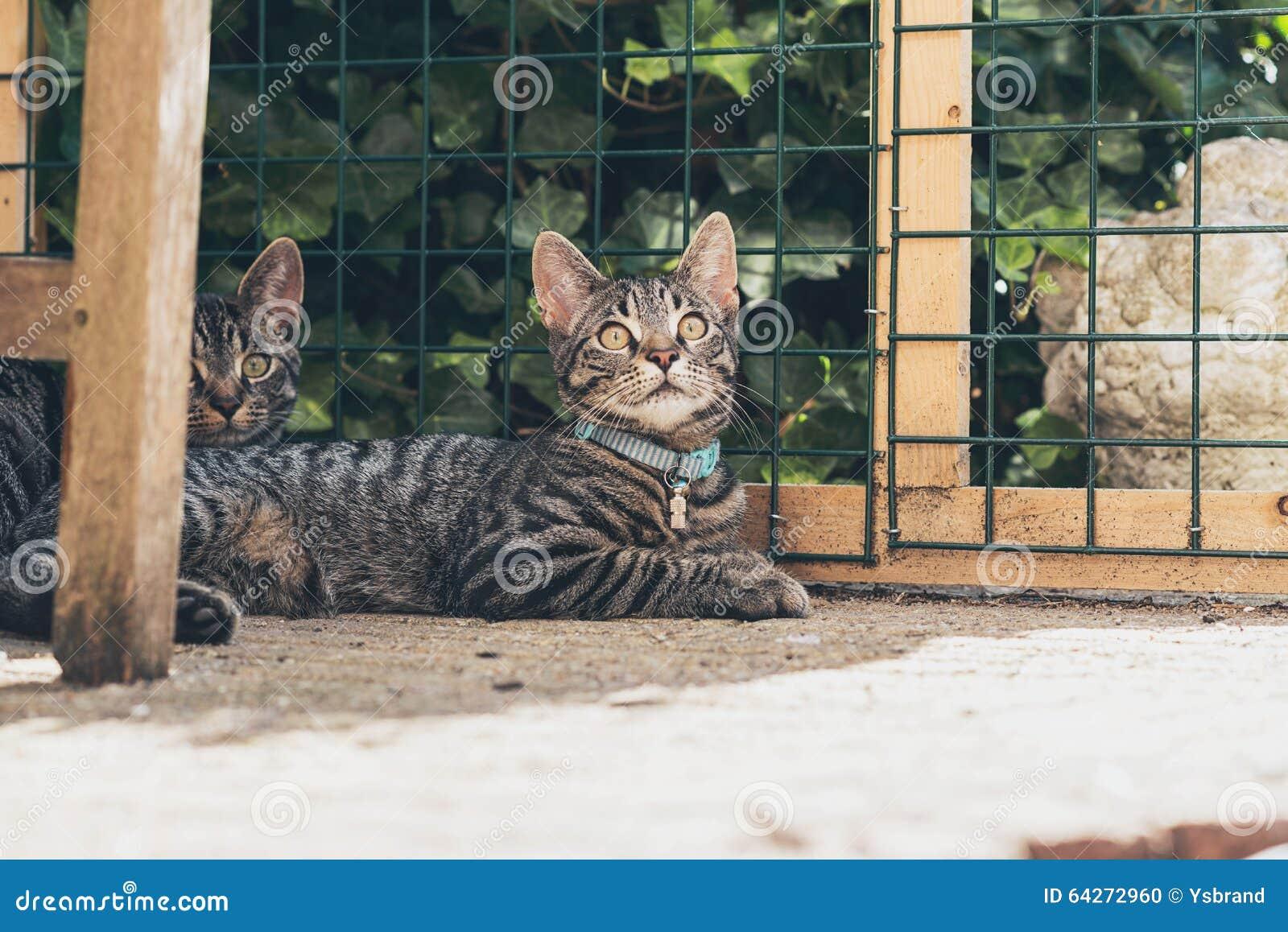junge katzen der getigerten katze die im garten vor zaun. Black Bedroom Furniture Sets. Home Design Ideas