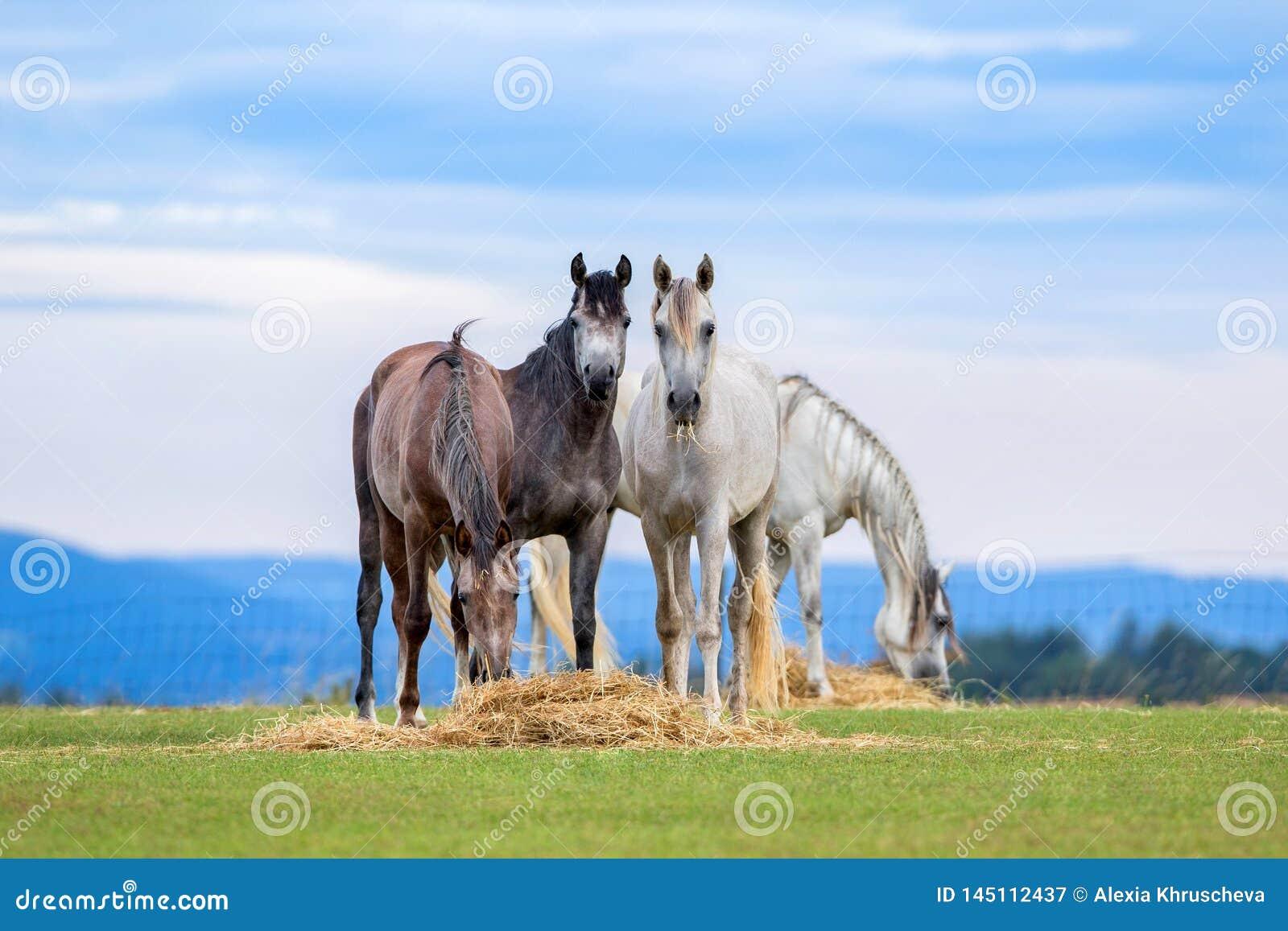 Junge Pferde lassen auf Weide im Sommer weiden