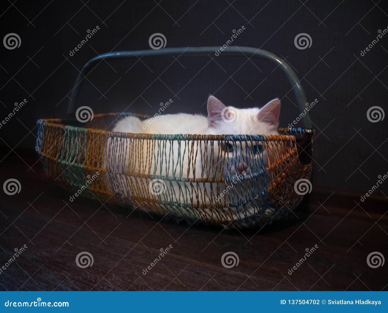 Junge weiße flaumige Katze liegt das Stillstehen entspannt in einem Weidenkorb