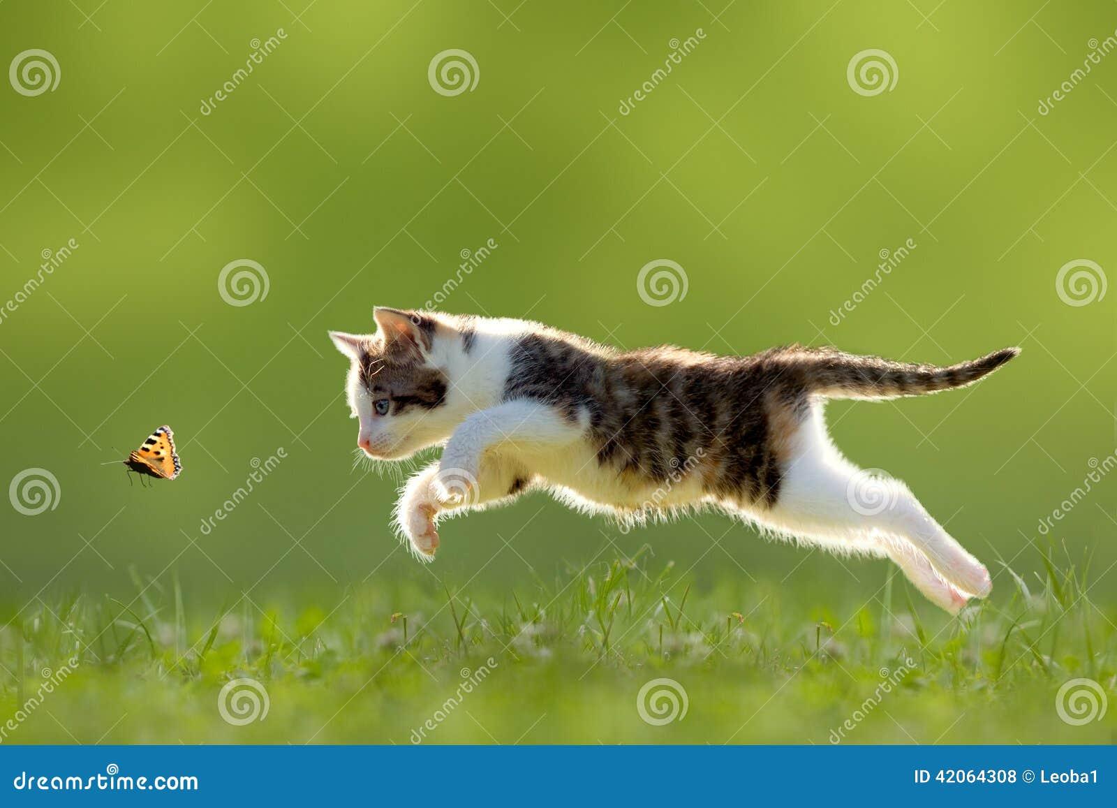 Junger Katzenjagdschmetterling