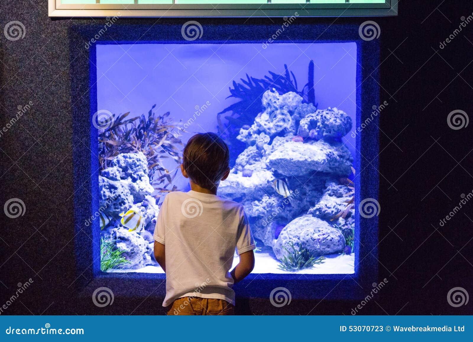 junger mann der algen und steine im beh lter betrachtet stockbild bild von ernst. Black Bedroom Furniture Sets. Home Design Ideas